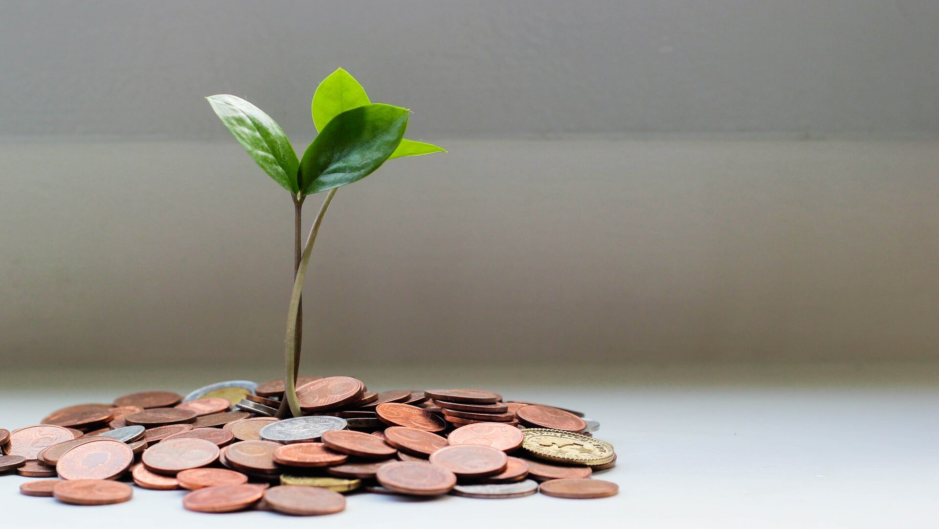 Green leaves sprouting from a pile of copper coins